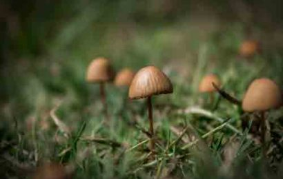 What are the attributes provided by a reliable platform to buy mushroom online?