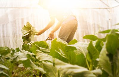 What Are The Duties And Responsibilities Of Greenhouse Specialists?
